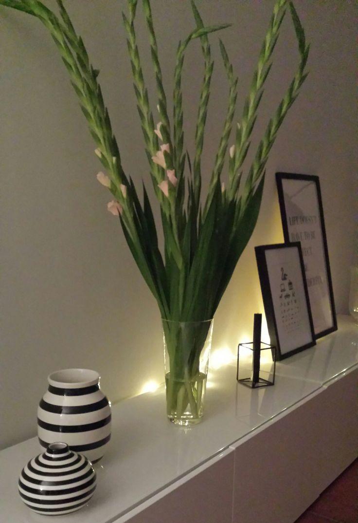 Abendstimmung mit Gladiolen