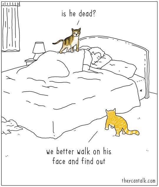 Yep... My cat's done this.