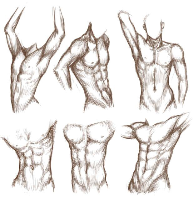 Male Torso 01 by MadameNyx on DeviantArt