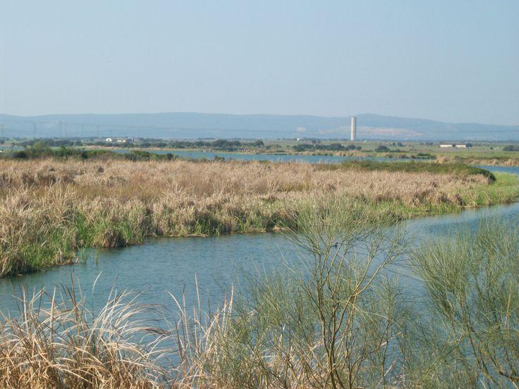 Embalse de Arrocampo. ( Caceres ). Avistamiento de #Aves #Birding http://www.vidasalvaje.net/