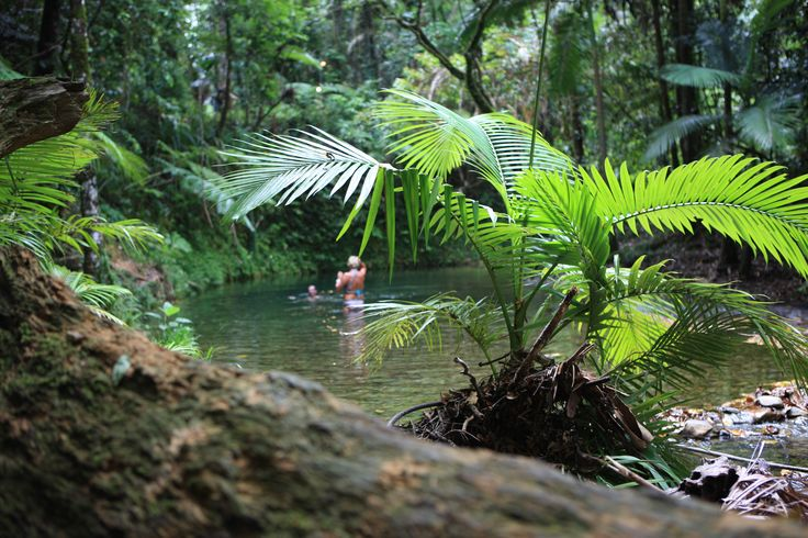Stretching from Daintree Village across the river, the Daintree encompasses Cape Kimberley, Cow Bay, Thornton's Peak, Cooper Creek, Thornton Beach, Noah Valley, Cape Tribulation and the Bloomfield Track to the north. #Daintree #cairns