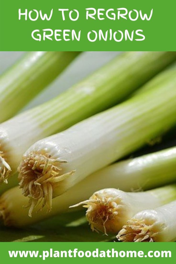16 vegetables you can regrow from kitchen scraps plant