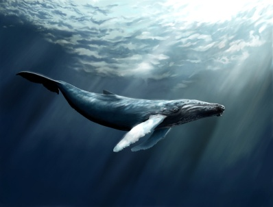 Whale Facts for Kids {because I know its only a matter of time before BE asks}
