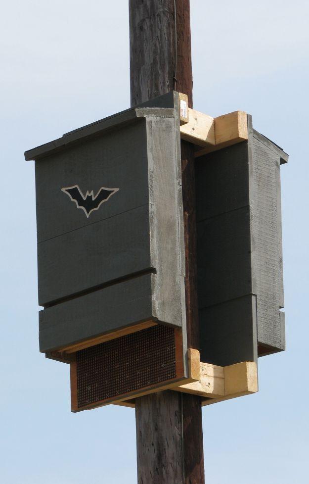 Bat House Ideas Worth Hanging Around For   Back-to-back Bat Box