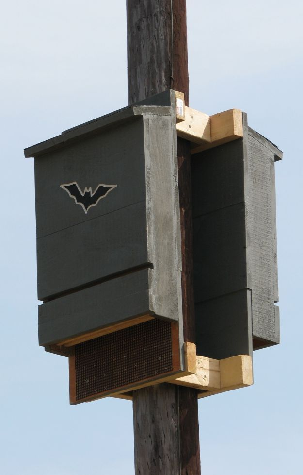 25 best ideas about bat box on pinterest bat box plans for Bat house plans