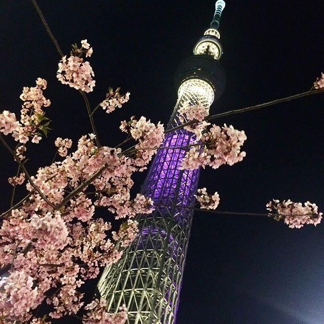 【mika_tan】さんのInstagramをピンしています。 《スカイツリー♡  もう桜も咲いていたよ🌸💓 本当はDisneyの予定だったけど、寒すぎてやめたの ω`) 最近、知らない人に優しくしててかっこよかった*̣̩⋆̩* #スカイツリー#梅桜#桜#きれい#寒い#disney#あったかい日にいきたい#京都行きたい》