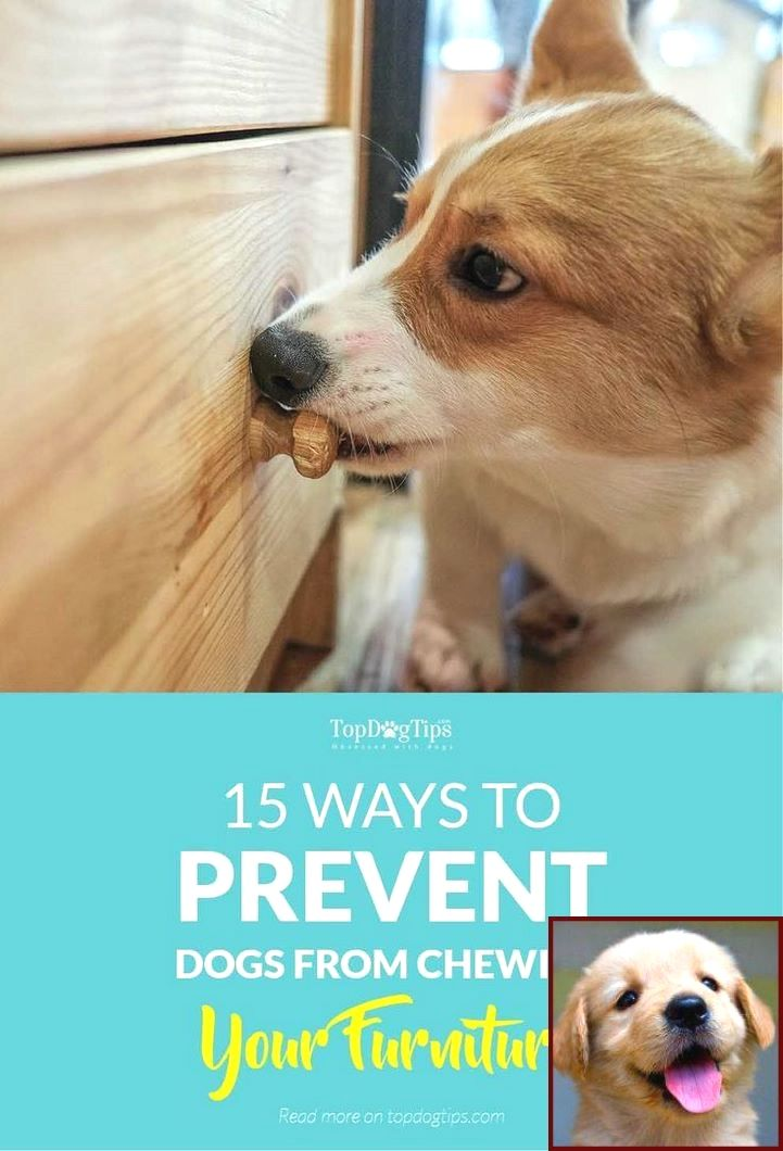 1 Have Dog Behavior Problems Learn About Potty Training A Pet Rat