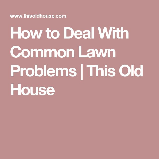 Best 25 Lawn Problems Ideas On Pinterest Lawn Repair