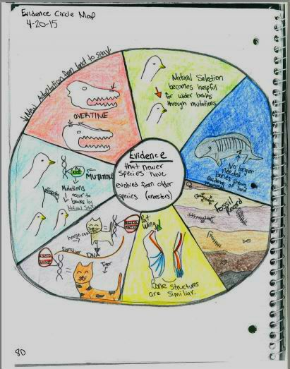 Students loved making these evidence for evolution circle maps! Get directions and examples of student-created maps plus foldable notes for teaching the evidence for evolution.