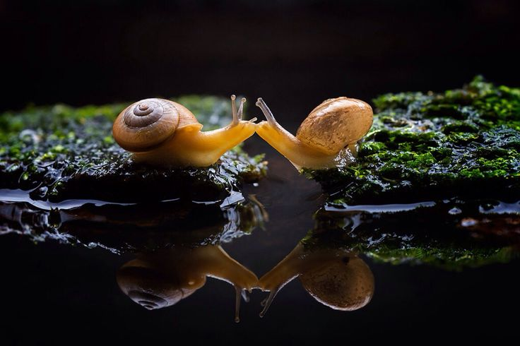35 best images about My Snail Farm! :D on Pinterest | Ceramics, Kiss ...