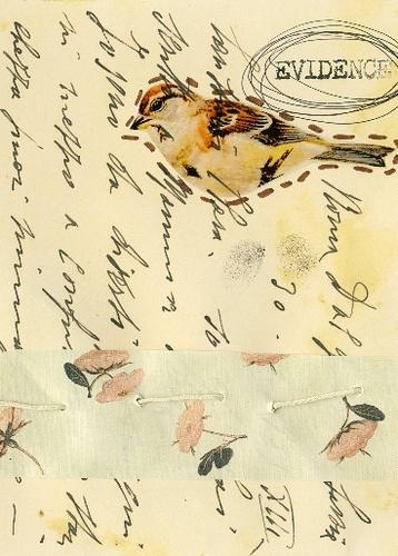 Evidence of Birds by afiori.com: Photo