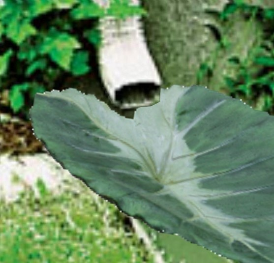 Cast concrete leaf  as a drain for your downspout