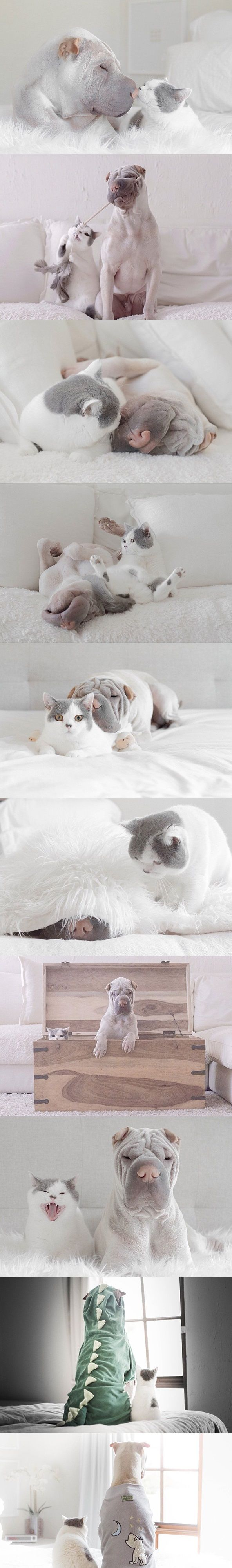 Paddington The Dog And Butler The Cat | Best Friends Ever! | Photos By ©Annie & Paddington