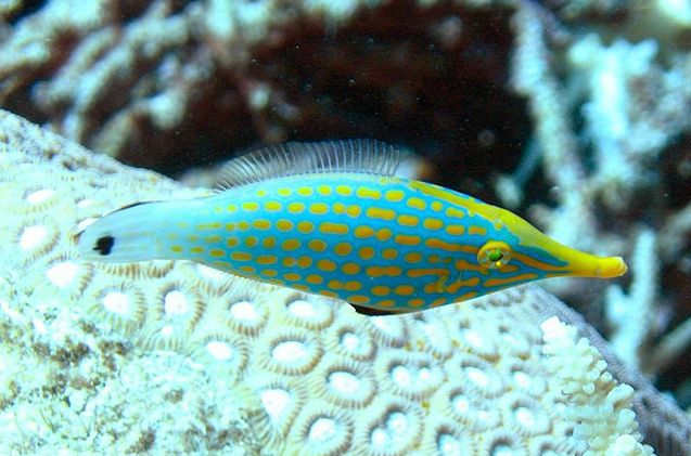 181 best fish tank images on pinterest aquariums fish for Types of small fish