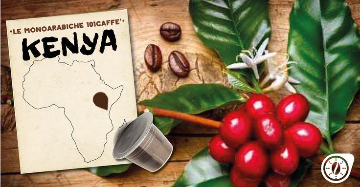Dal Kenya, terra di altopiani e di paesaggi mozzafiato, arriva un'Arabica dai profumi intensi e fruttati che ci regala un caffè leggero ma ricco di aromi. Il nostro consiglio per coglierne ogni sfumatura di sapore? Gustarlo senza zucchero! Disponibile per sistema Nespresso. Anche in cialde ecologiche Ese44.
