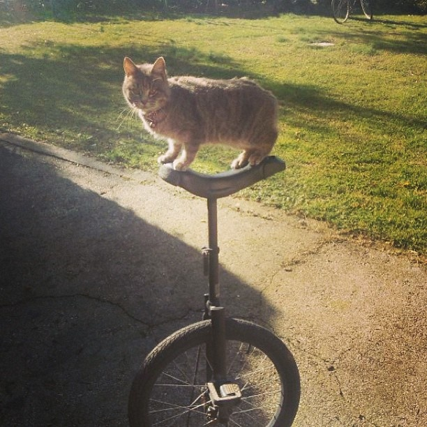 89 best Unicycles images on Pinterest   Unicycle, Bicycles