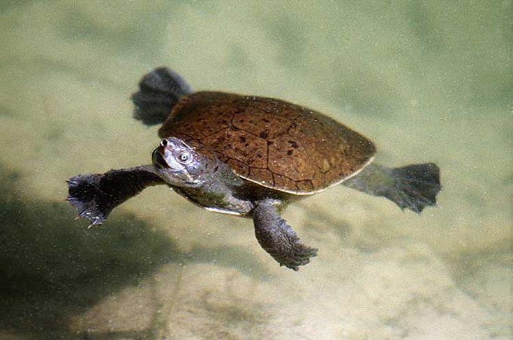 Hi! I live in Lake Wabby #fraserisland #queensland #australia www.fraserisland.net
