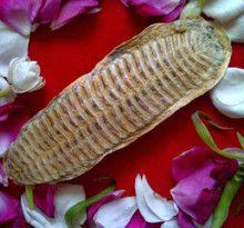 Ikan Tempel Bertuah Asli | Java Mistik