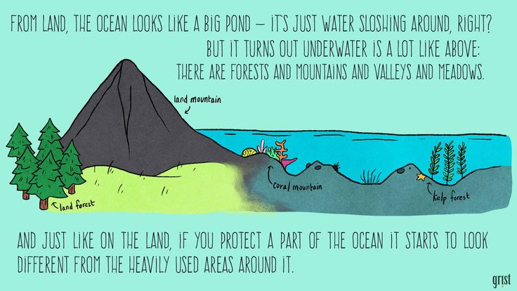 This illustrated guide makes marine protected areasfascinating | Grist