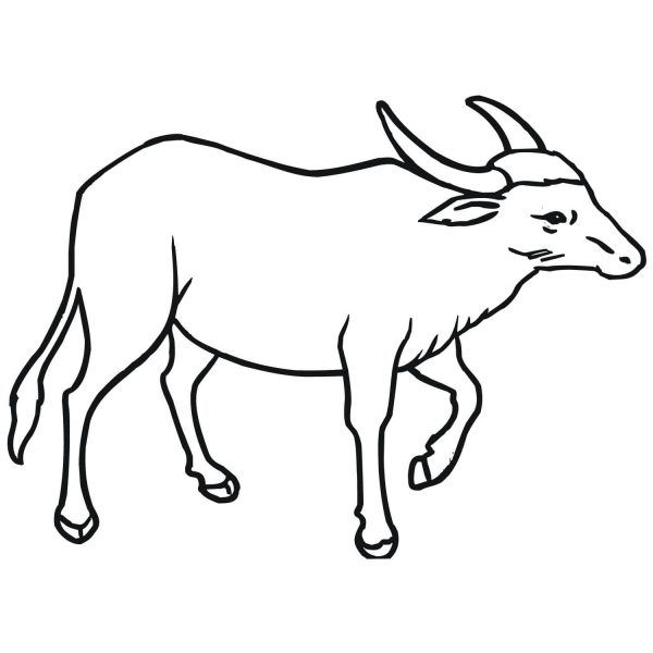 Wild Asian Water Buffalo Coloring Page Free Printable Intended