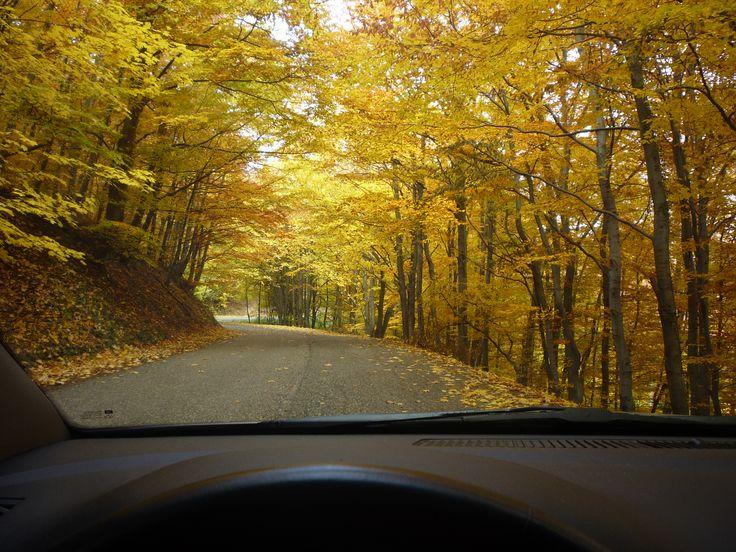 Út az őszi színekben pompázó  Börzsöny hegységen át...