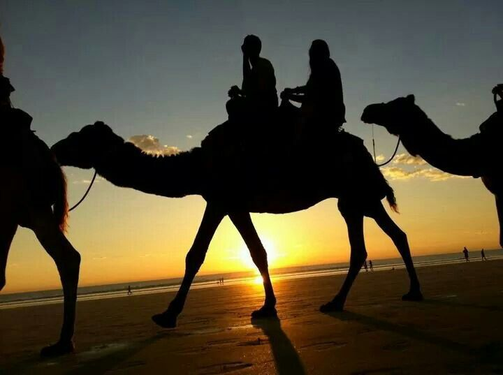 Sunset Silhouettes #redsuncamels #broome #cablebeach
