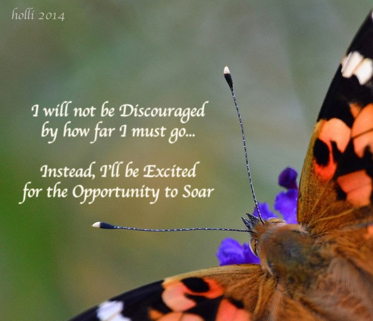Spiritual Butterfly Quotes: 42 Best Things About Butterfly QUOTES Images On Pinterest
