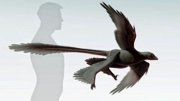 EVOLUCIONISMO E CRIACIONISMO: Dinossauro de 'quatro asas' descoberto na China po...