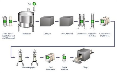 vaccine manufacturing process | Vectors | Vaccines Learning Center | Biopharmaceutical Manufacturing ...