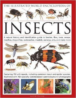 The Illustrated World Encyclopedia of Insects: A Natural History and Identification Guide to Beetles, Flies, Bees, wasps, Springtails, Mayflies,   Crickets, Bugs, Grasshoppers, Fleas, Spide: Martin Walters: 9780754819097: Amazon.com: Books