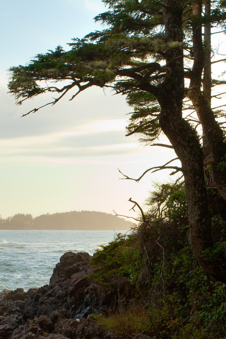 It's a special place where the old growth rain forest meets the ocean