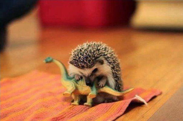 Возможгая причина вымирания динозавров