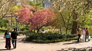 Best Historic Walking Tours in New York