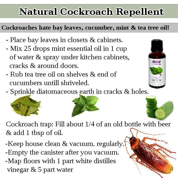 Best 25 Roach Killer Ideas On Pinterest Roaches Roach