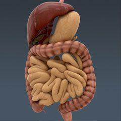 Austin Publishing Group: Austin Digestive System