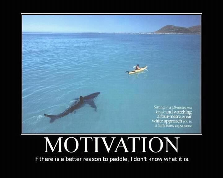 paddle! paaaaddle!: Paddles, Get Motivation, Motivation Quotes, Chalkboards Signs, Funny Photo, Funny Inspiration Quotes, Sharks, Weights Loss, Snipers Rifles