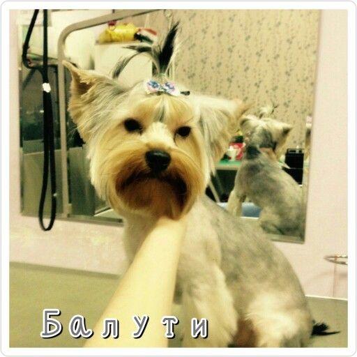 #PhotoGrid Доброй ночи.  #бивер #бивер_йорк #бивериорк #bieweryorkie #yorkie #yorkshirterier #yorkieterrier #yorkiesofinstagram #dogstyling #dogspa #zoosalon #balyti #york #maltese #biewer #bolonka #мимими #doglover #york #instadog #instasize #instayork #animals #пес #собака #моясобака #йорк #щенок #животные #lovely #art #follow #fashion #style