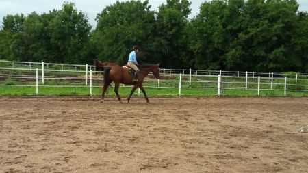 Featured horse of the Day: Roulette, imported RPSI,17', 16yrs, Warmbloods (All) gelding for Sale in Kansas. Registration(s): Rheinland Pfalz-Saar International. View full ad here: http://myhorseforsale.com/horses-for-sale/details/?hid=30068 .