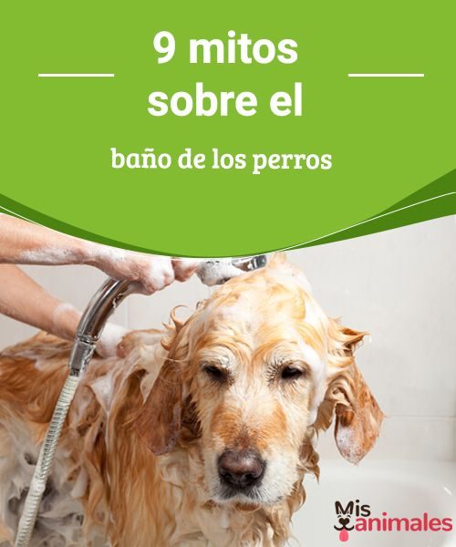 9 mitos sobre el baño de los perros - Mis animales  Hay muchos mitos circulando en relación al baño de los perros. Aprende a identificarlos para cuidar mejor la piel y el pelaje de tu amigo de cuatro patas.