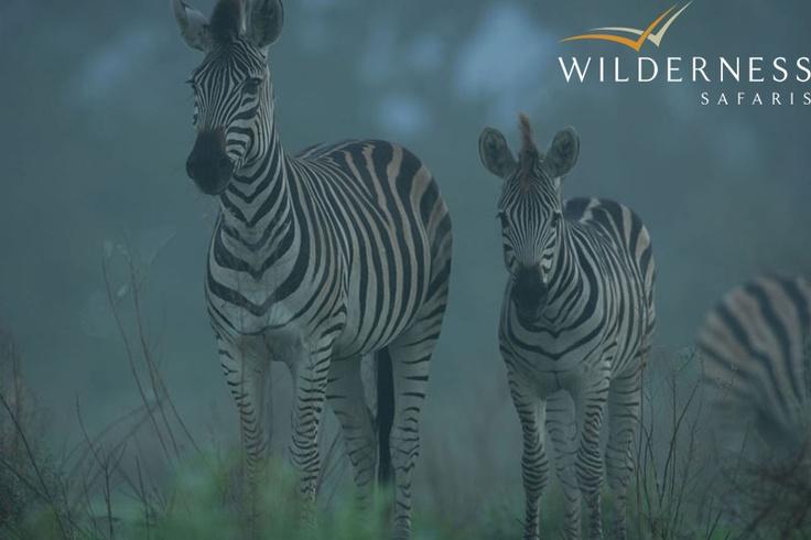 Chitabe Lediba - misty dazzle. #Safari #Africa #Botswana #WildernessSafaris