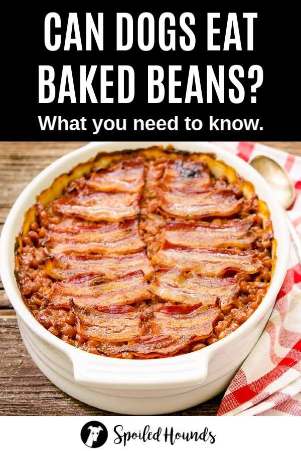 Can Dogs Eat Beans What To Know About Dogs And Beans Dog Food