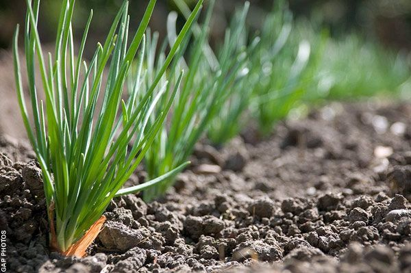 Top 10 vegetables to grow over winter - Telegraph