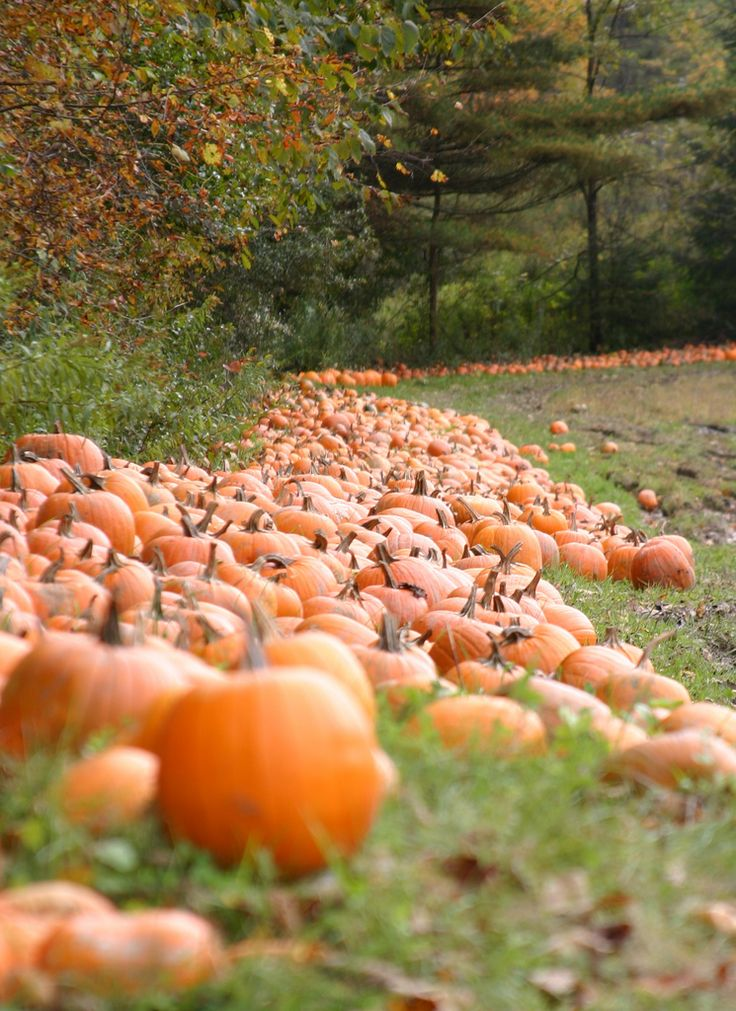 The Coziness of Autumn                                                       …