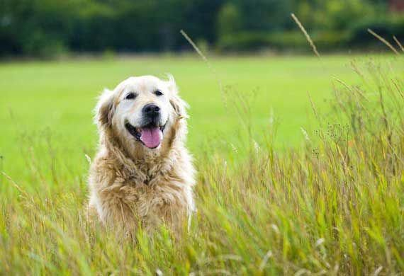 Is Pet Insurance Worth It Healthypetcare Pet Medical Insurance