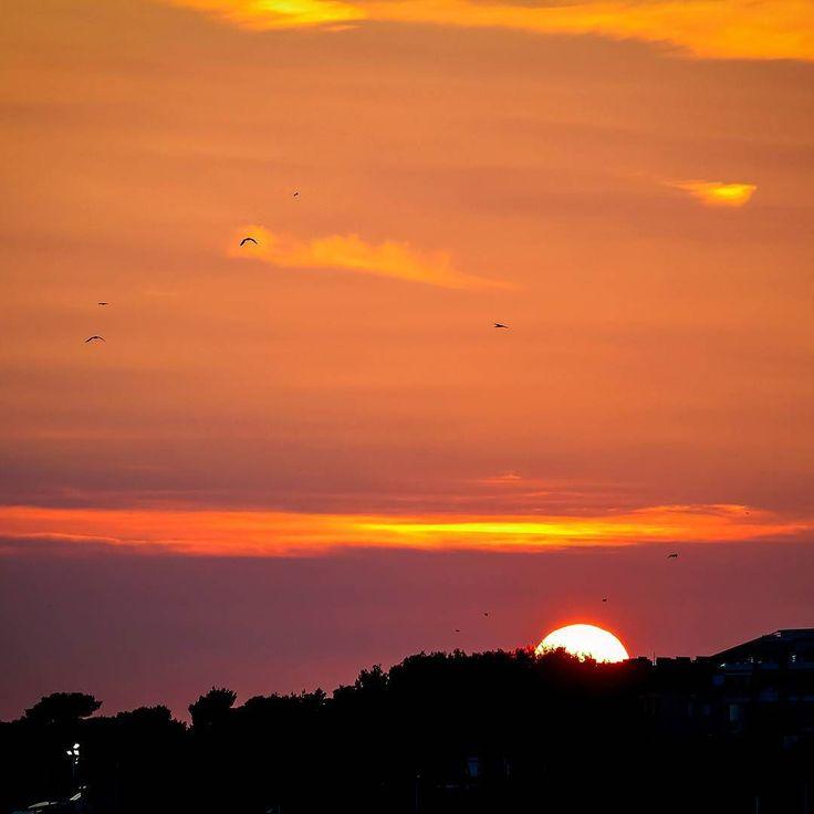 Slam dunk! ..but the Sun doesn'- SLAM DUNK BABY! . .. ... #birds #nature #slamdunk #the #sun #newspaper #notreally #whatever #pretty #picture #photography #photographer #split #croatia #summer #memories #amazing #nostalgia #what #canon #canonphotography #canonhrvatska #canonglobal #flying #school #visitsplit #splitcroatia #lights #darks #contrast