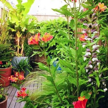 69 best images about jardin et terrasse on pinterest gardens coins and belle for Recherche entretien jardin