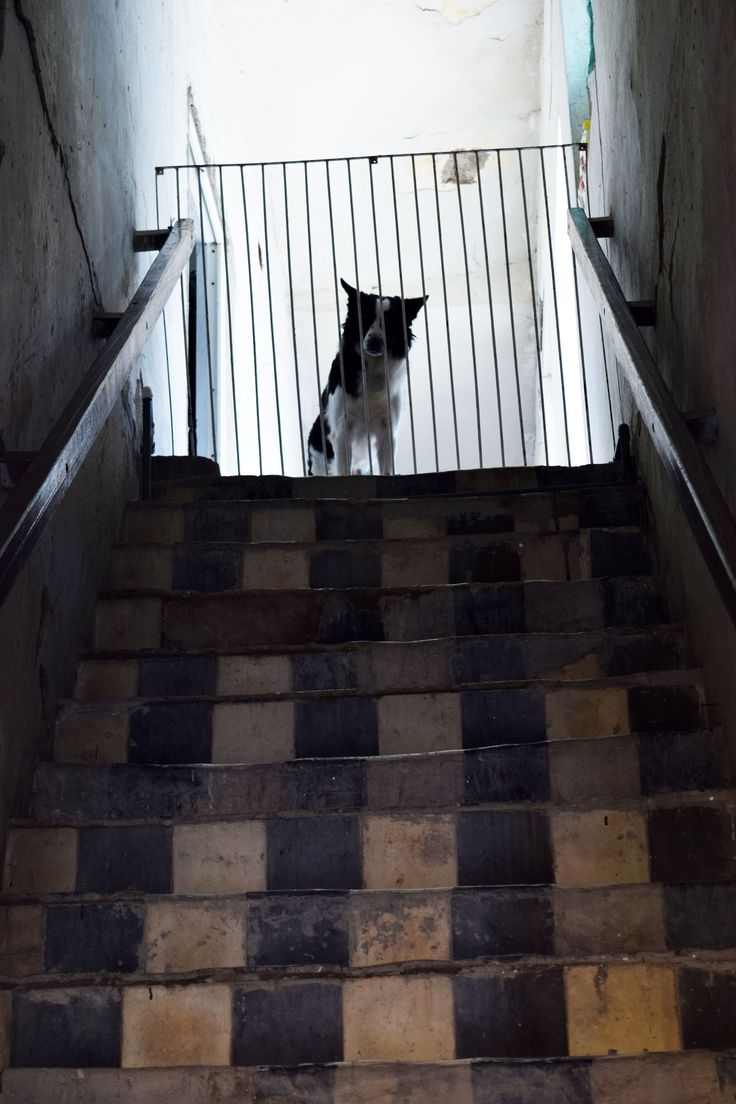 El encuentro #dog #photography #stairs