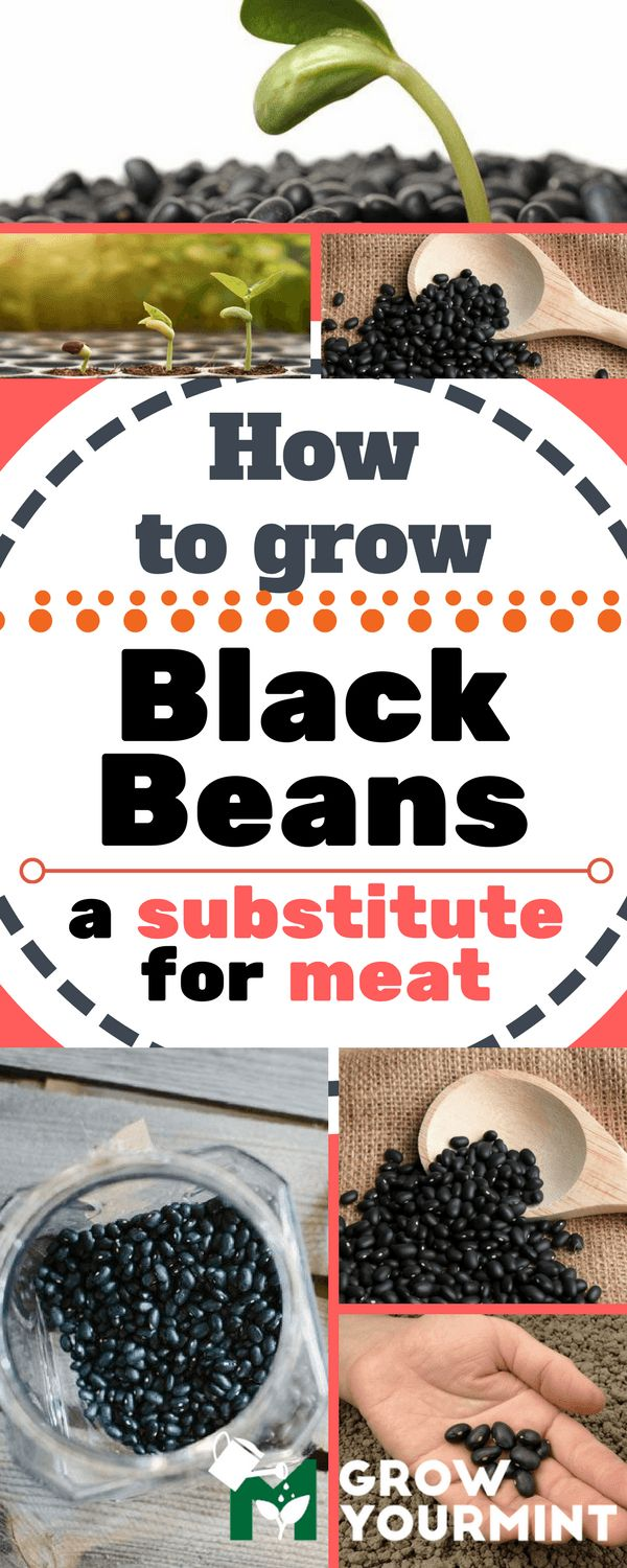 Don't need to substitute meat, just like black means. I like black beans with my meat!!