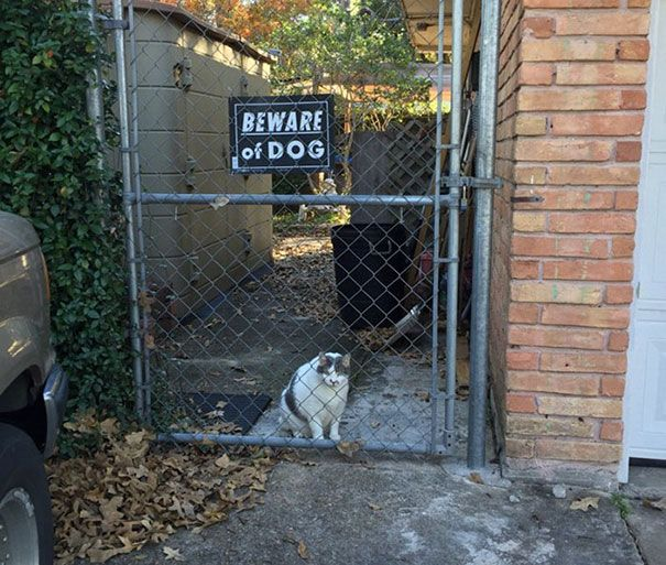 Best Dogs Images On Pinterest Dog Signs Beware Of Dog And - 18 ferocious dogs posing beside their beware of dog signs