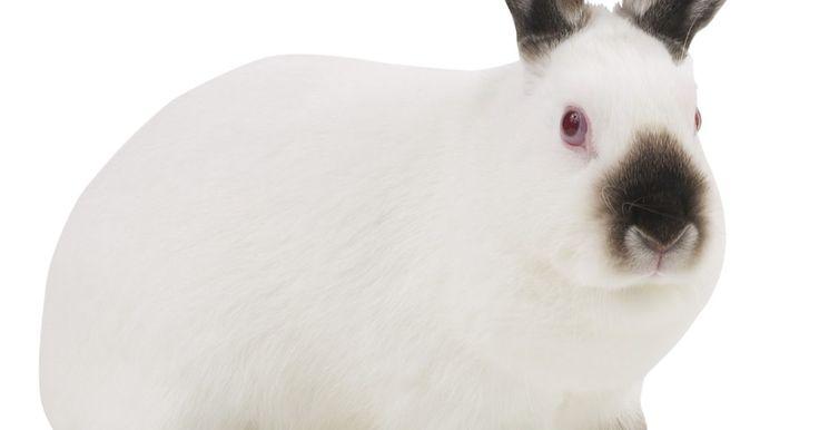 ¿Qué tan rápido corre un conejo?. Los conejos, un tipo de lagomorfo de la familia de los lepóridos, son conocidos por su rapidez y agilidad. Son velocistas rápidos y saltadores poderosos, con cuerpos diseñados para reaccionar rápidamente al peligro. El conejo promedio puede correr a donde sea de 25 a 45 mph (40,23 a 72,42 km/h), dependiendo del tipo, raza y salud general del ...